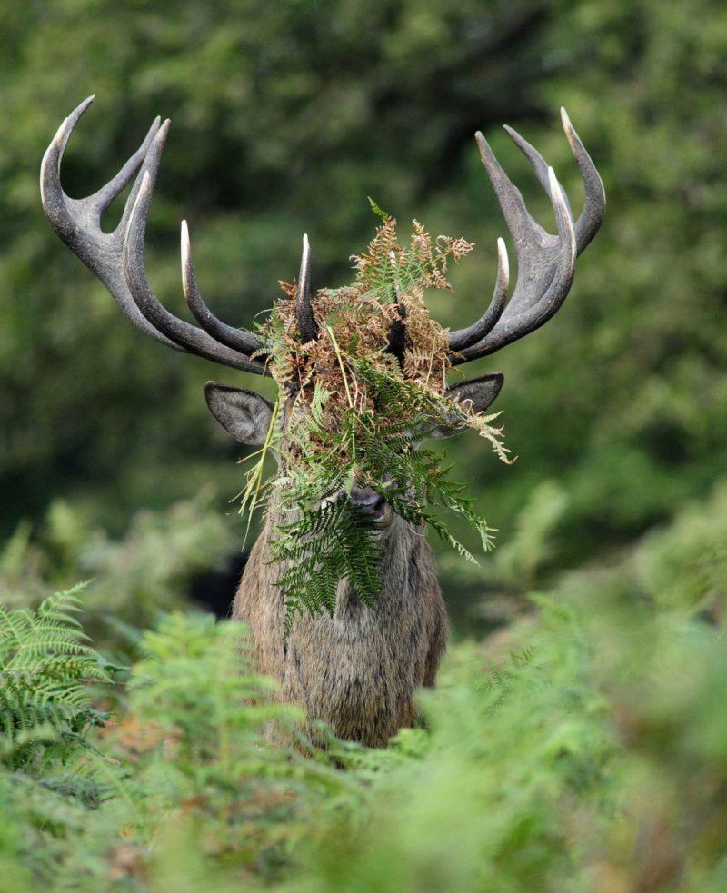 Mother's Law deer
